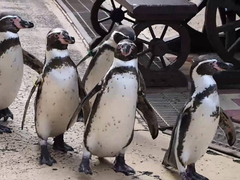 長崎ペンギン水族館への行き方・楽しみ方