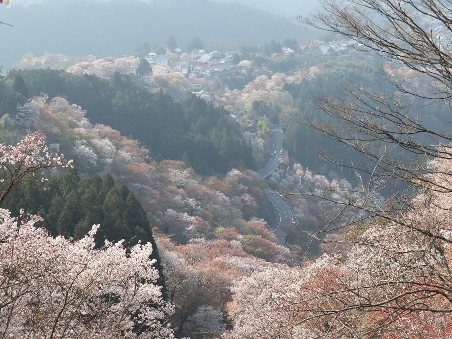 奈良県・吉野山の世界一!超絶景の千本桜を見に行こう【奈良観光】