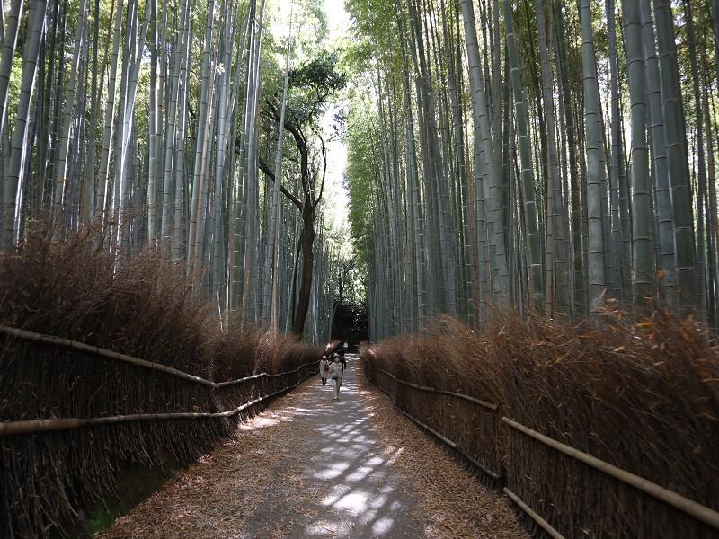 竹林の小径(竹林の道)への行き方・アクセス【京都嵐山・観光】